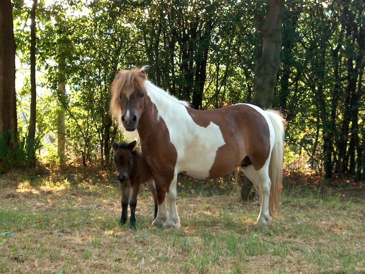 Fiera Cavalli a Verona dal 26 al 29 ottobre 2017